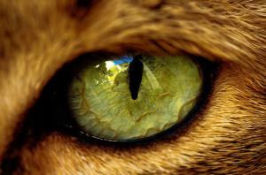 ojo-1